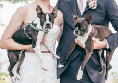 dogs at a maine wedding